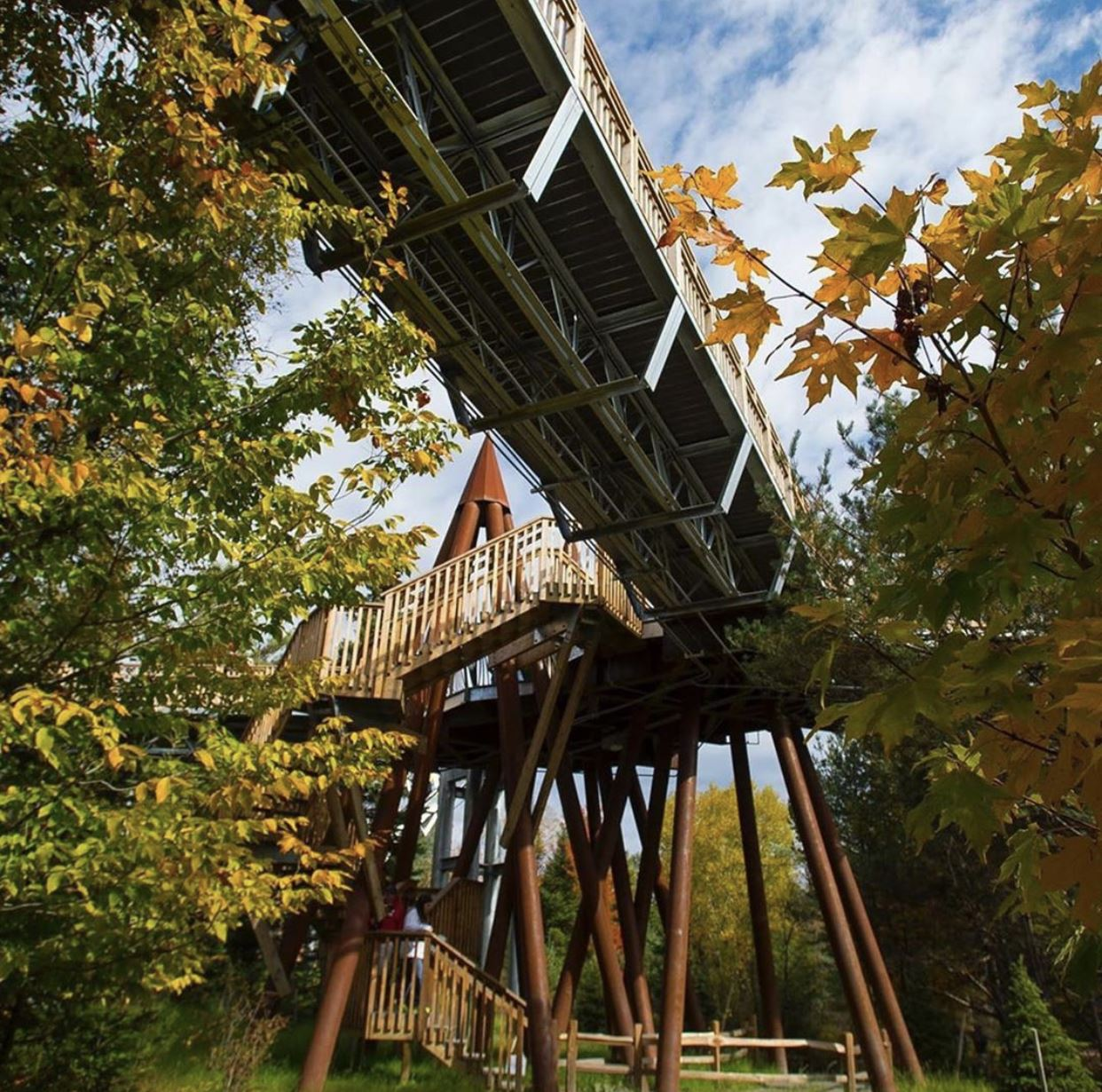 Looking at the @iloveny Fall Foliage Report- Tupper Lake is at peak! Why not take in the fall foliage at the Wild Center and leaf peep from atop the Wild Walk